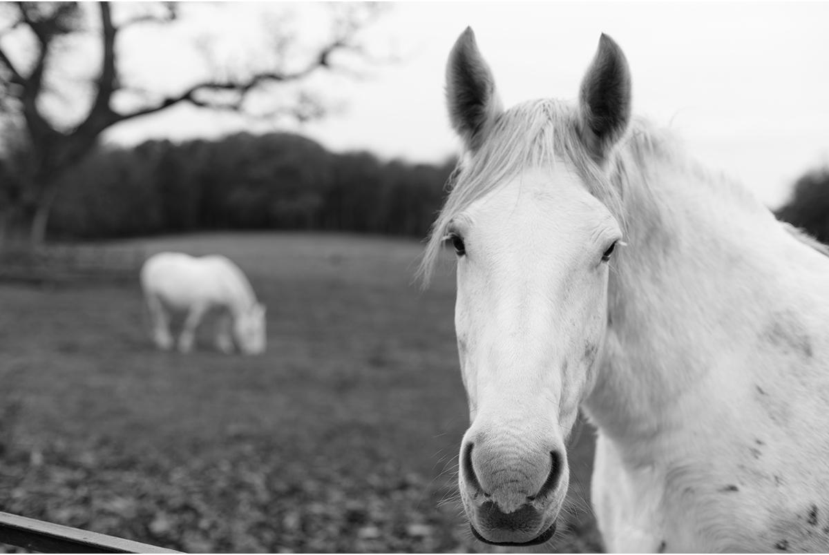 white horse castlemartyr resort